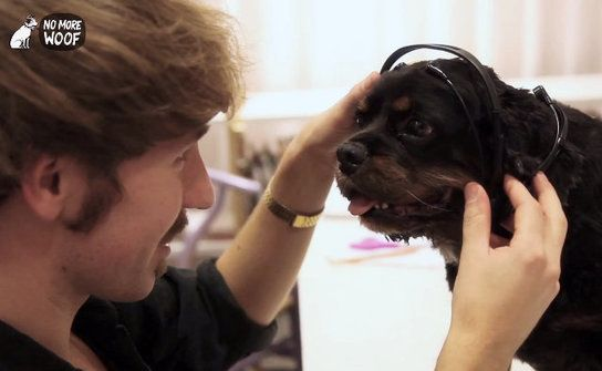 Mind-Reading Headset For Dogs Allows Them To Speak   Geekologie