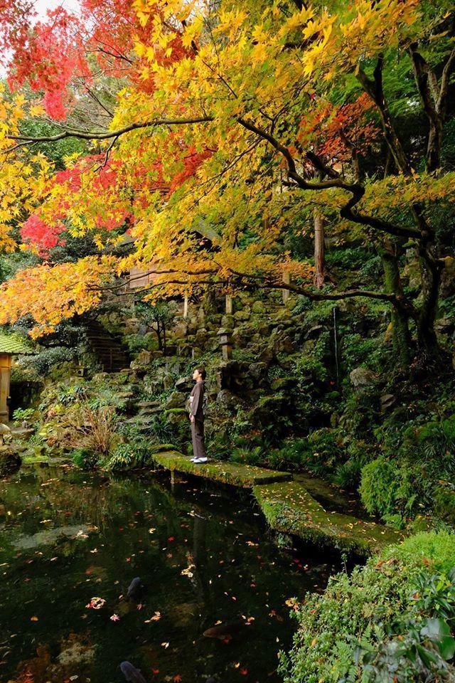 【紅葉のうつる着物】 秋には映えるのはやはり着物。 橋本関雪ゆかり月心寺で撮影をさせて頂きました。 どこを切り取っても絵になる風景の中、風でサーッと散る紅葉、池に目を凝らすと気づく鯉。時間を忘れる空間でした。 着物は、帯びる程度の柔らかい紫地、亀甲の結城紬。 合わせる帯は金唐革の立体感をイメージした、唐花のしぼ織。 着物姿もこの景色に溶け込んでいました。 #月心寺 #となみ織物 #しぼ織 #となみ帯 #結城紬