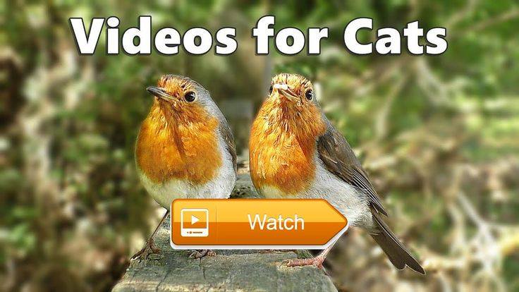 Videos for Cats and Dogs to Watch Birds Spectacular  Videos for Cats and Dogs to Watch at Home Birds Spectacular Video Produced by Paul Dinning Wildlife in Cornwall Filmed in May  on Pet Lovers