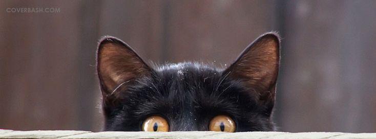 Black Cat Facebook Covers, coverbash.com has the best Black Cat Facebook cover photos for your facebook timeline Profile