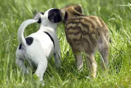 Chew it not lick it...