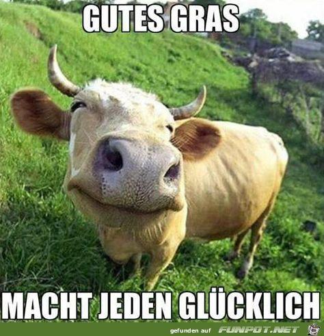 lustiges Bild 'Glücklich.png' von Desiree. Eine von 14329 Dateien in der Kategorie 'witzige Bilder' auf FUNPOT.