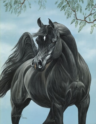Tracey Shivak creates such wonderful Arabian horse paintings, I have a small original painting similar to this one.