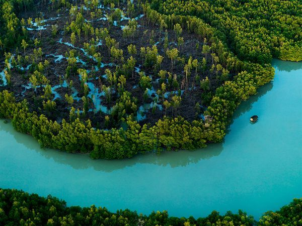 Picture of mangroves in Johor, Malaysia. Mangroves fringe the tip of Peninsular Malaysia, in Johor, the southernmost reach of mainland Asia.  #Malaysia #tours