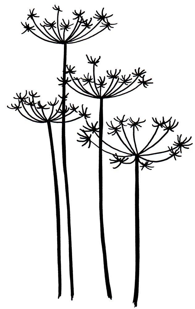 Dandelion Flower Line Drawing : Best flower silhouette images on pinterest