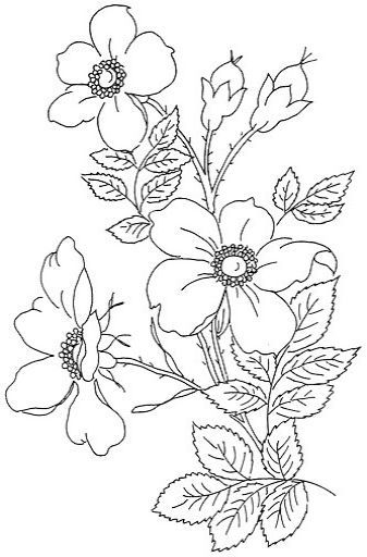 Embroidery Designs Nairn Hand Embroidery Template | Flowers coloring
