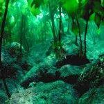 Lago traful - bosque sumergido de la Patagonia-REPÚBLICA ARGENTINA