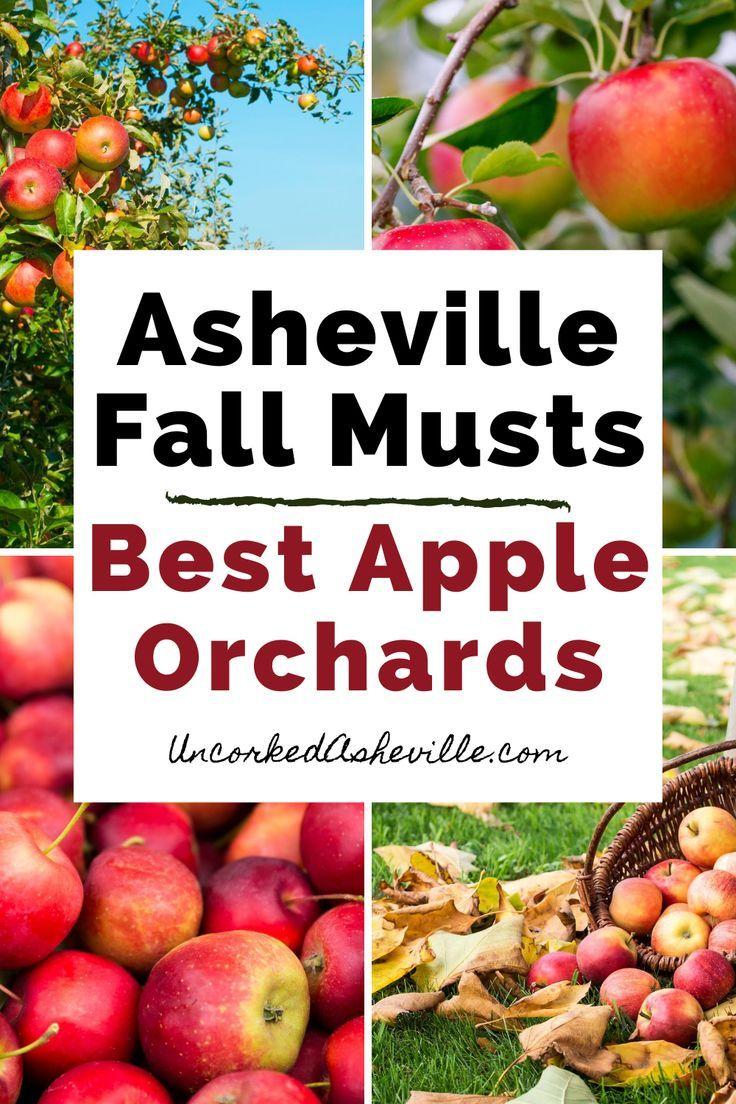 5 Delicious Apple Orchards In Hendersonville Nc North Carolina Travel Fall Vacations North Carolina Vacations