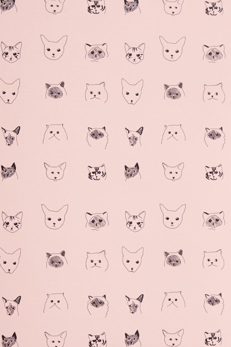 Wallpaper iphone cute cat - Cats Wallpaper Anthropologie Com