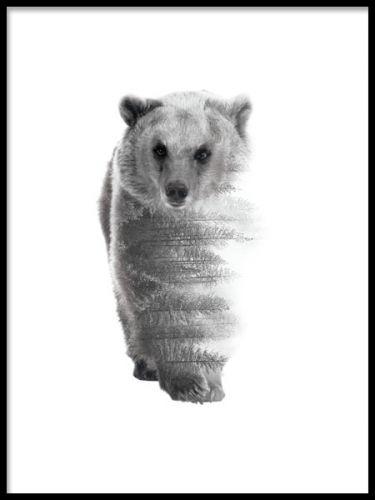 Stilren svartvit tavla med naturfotografi. Björn med dubbelexponering med skog. Nordisk inredningsstil. Posters och prints med natur och djur.