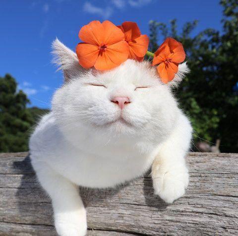 HERZLICHE GLÜCKWÜNSCHE! Vielen Dank für Sie, Katzen leben länger als je zuvor