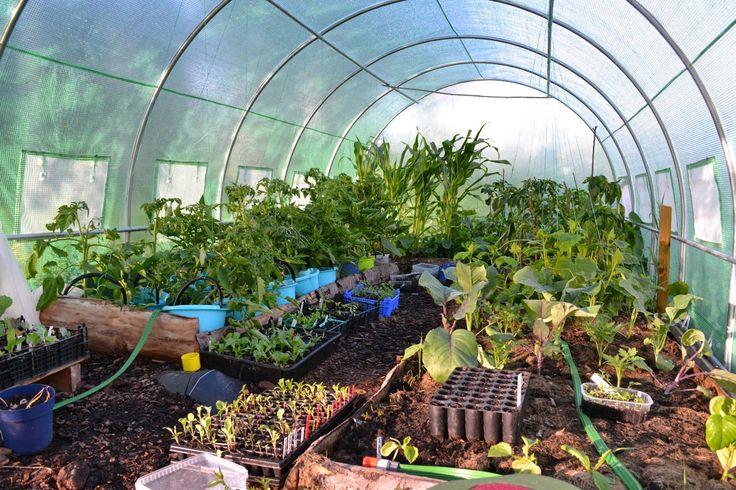 Polytunnel in Sweden, June 2014. http://skillnadenstradgard.blogspot.se/2014/12/tatueringar-och-odlingstunnlar.html #trädgård #odla #garden #gardening #polytunnel #greenhouse