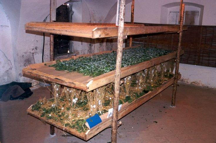 Mestieri di una volta: la coltura del baco da seta a Gussago - http://www.gussagonews.it/mestieri-coltura-baco-seta-gussago/