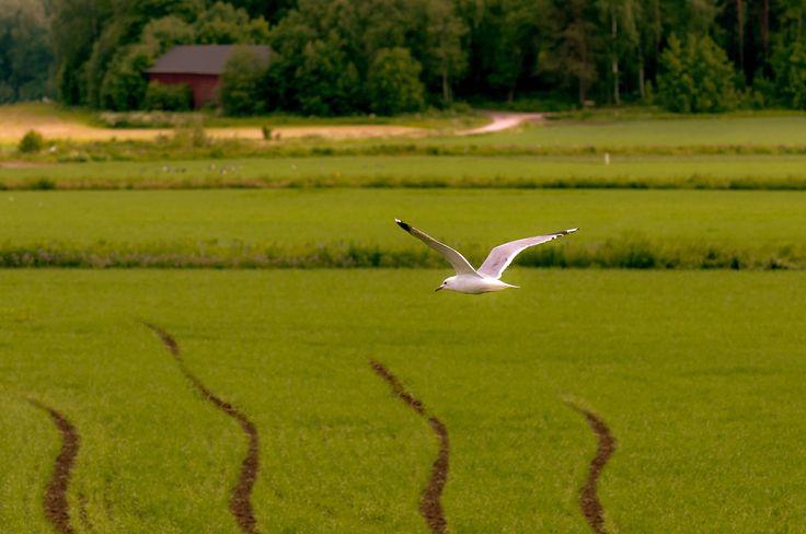 Finland in June by Graziella Serra Art & Photo on 500px