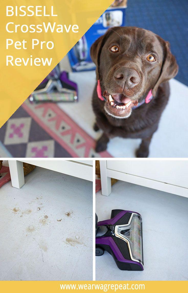 Reviewing Bissell Crosswave Pet Pro Dog Blog Pets Pet Companies