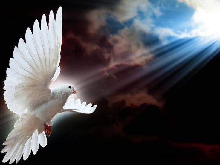 Os 7 dons do Espírito Santo, numa explicação fácil de entender