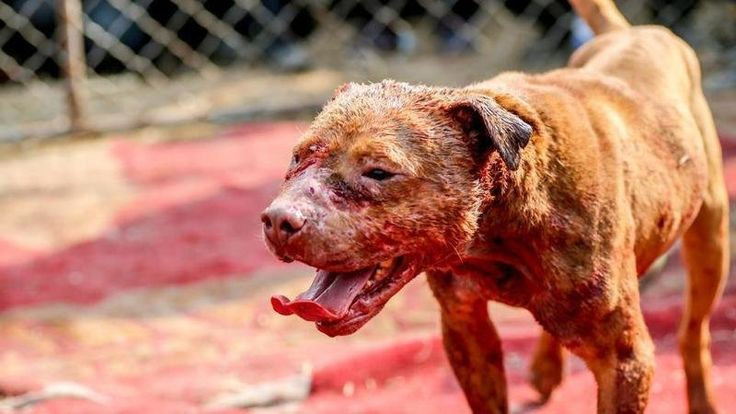 Petition · Animal Legal Defense Fund: WE SPEAK AGAINST DOG FIGHTING · Change.org