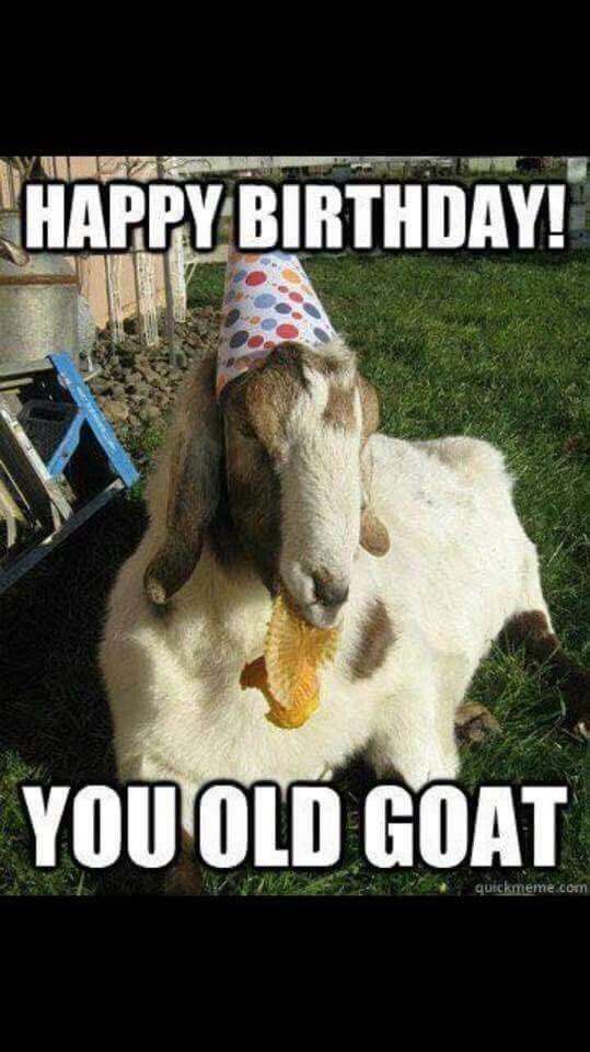 Happy birthday goat - photo#33