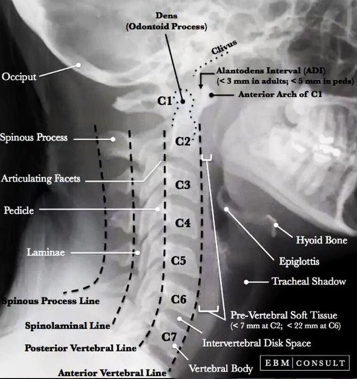 14 best Yoga Anatomy images on Pinterest | Yoga anatomy, Lab and Yin ...