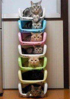 mais um condomínio para os gatitos!