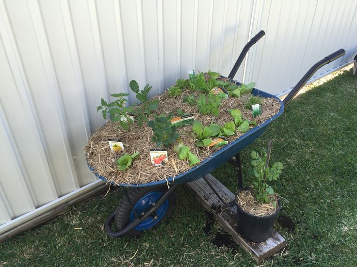 Portable vege/herb garden! Perfect for little kids!