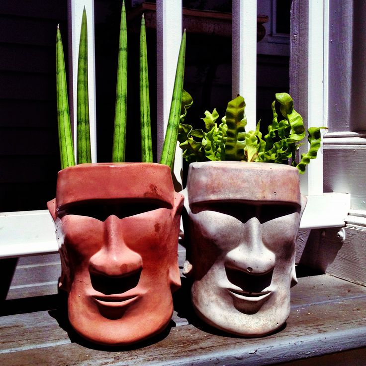 Tiki head planters- filled with a snake plant and a type of curly fern. I am OBSESSED with these planters the I MADE myself #DIY #OBSESSED