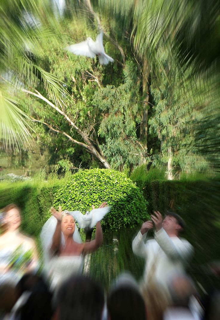 White doves at a wedding ceremony in the garden of Hotel Tamisa Golf, Mijas Costa - Spain.