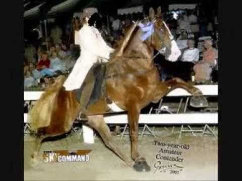 Die qualen des Tennessee Walking Horse - YouTube