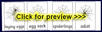 Spider life cycle Printable K-3 teaching resources in Aussie school fonts - SparkleBox Australia