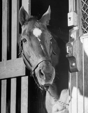 Man O' War 3/29/17 - 11/1/47 Sire of 1937 Triple Crown winner, War Admiral and grandsire of Seabiscuit. Man o' War rescued American horseracing in the 1920s, despite competing for just two years. Following his death, he was voted the greatest thoroughbred of the first half of the 20th Century. Following his brilliant 1919 debut, Man o' War won three stakes races in 17 days, and when he retired 16 months later, he was a national hero. Man o' War won 20 of his 21 races.