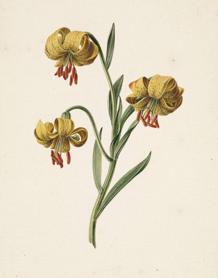 Tak met drie gele lelies, M. de Gijselaar, 1834