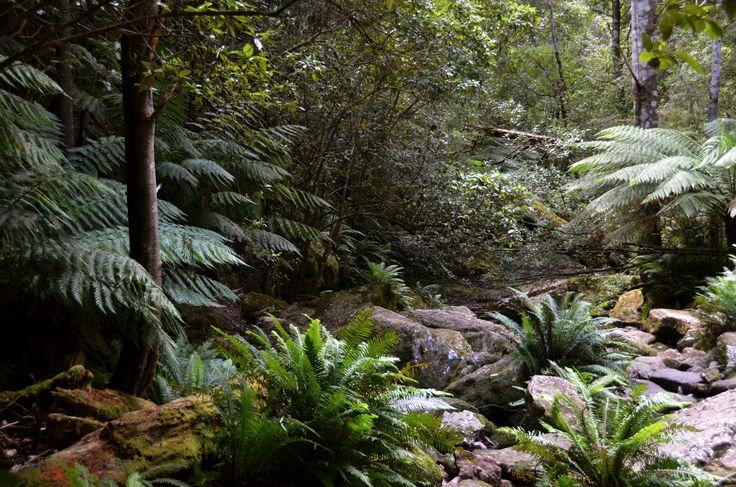 Snug Tiers Nature Recreation Area/ Snug Falls Track - 2 km 1hr rtn/ Tasmania
