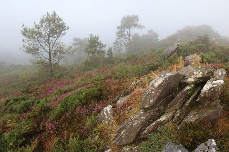 Retour à Roc'h an Daol par temps brumeux, avant que le soleil reprenne ses droits. Une atmosphère comme je les aime sur la lande rocheuse.
