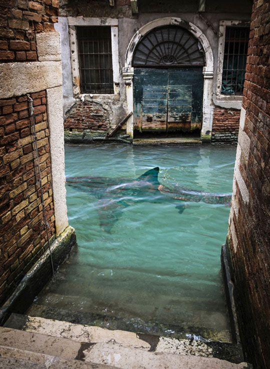 Go Home Shark, You're Drunk - Venice has some challenges they don't talk about much.