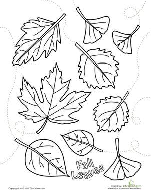 Best 25 leaf coloring ideas on pinterest leaf coloring page Sage Bush Coloring Page strawberries coloring page Buckwheat Coloring Page