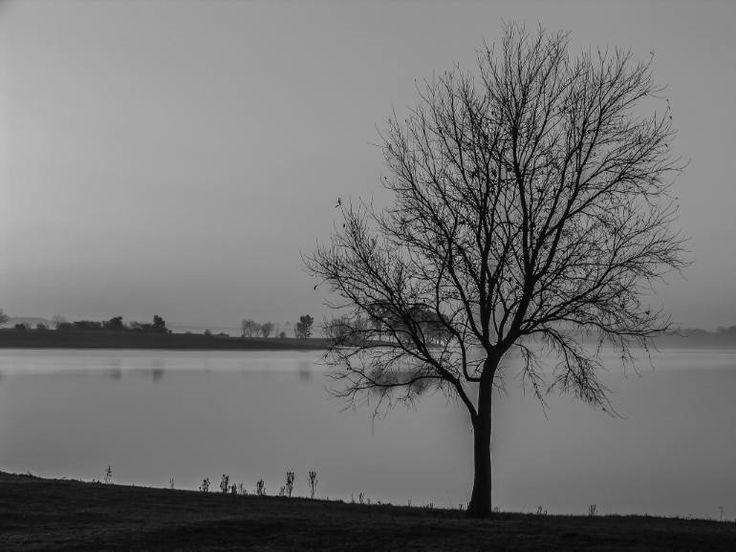"Saatchi Art Artist johann kruger; Photography, ""Lone Tree"" #art"