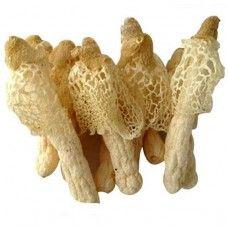 Bamboo Mushroom (Phallus indusiatus)