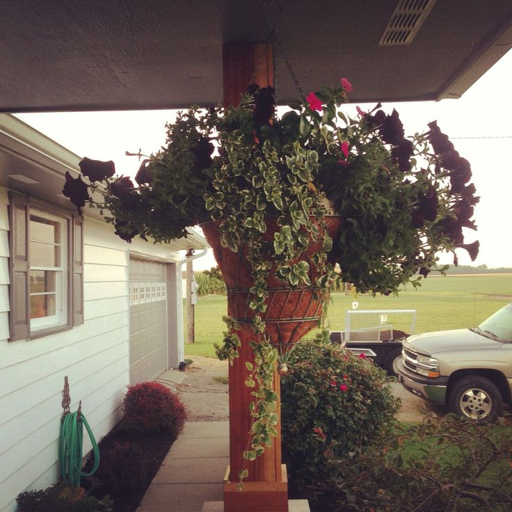 Hanging basket 16 best Our house images