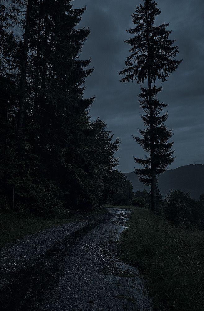 Dark Nature Dark Green Aesthetic Nature Aesthetic Dark Photography