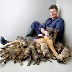 Osha, c'est le nom d'une chienne militaire australienne qui vient de donner la vie pour la première fois ... et de battre un record par la même occasion. Car le 17 avril, Osha, un Berger belge âgé de 4 ans, a mis au monde 17 petits. Jamais une chienne de défense n'avait eu autant de chiots en Australie.