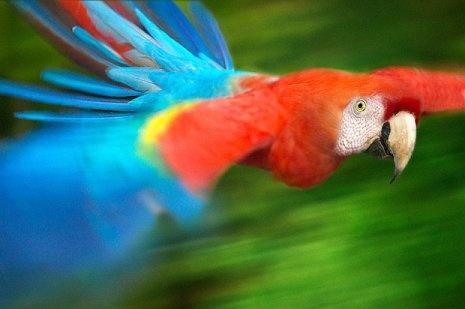 Steve Bloom Wildlife Photography | Golberz.Com