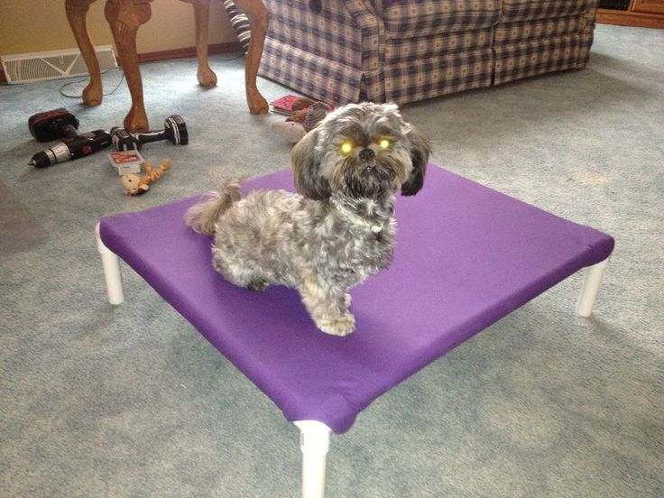 build a dog cot for around 10