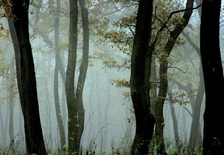Dr. Pálffy István  A TÁNC  Ködös, szürke február. A fák is összebújnak egy utolsó tangóra. Jön a tavasz... :) Több kép Istvántól: www.facebook.com/palffydr/photos_albums