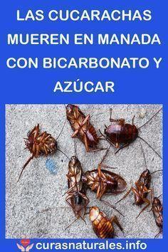 Como Acabar Con Las Hormigas En Mi Cocina Pin En Hogar