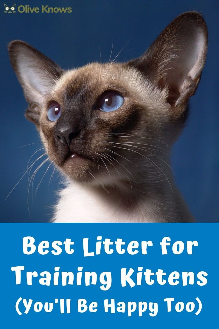 Litter Training For Kittens Just Like Potty Training For Toddlers Or House Training For Puppies Can Cat Training Cat Training Kittens Best Litter For Kittens