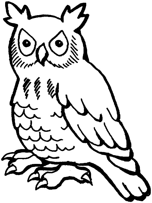 Stylized line drawing owl Art Inspiration for Abs
