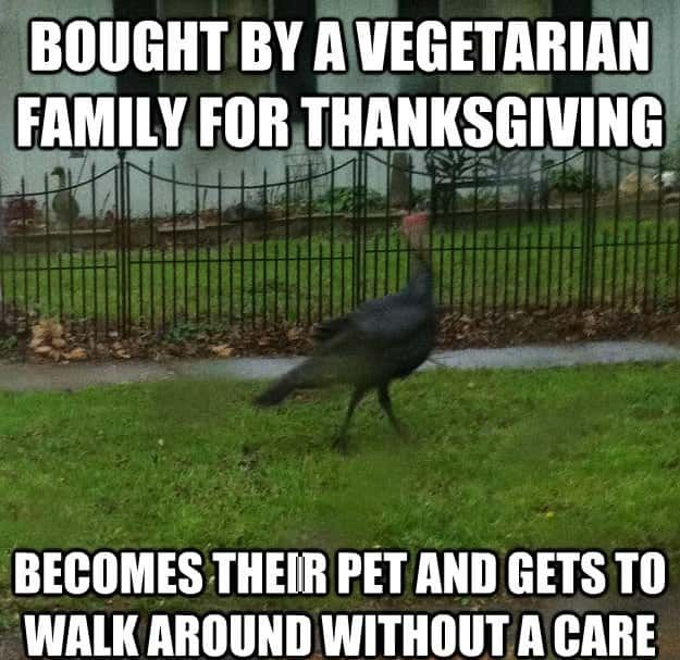 16 Funny Thanksgiving Memes