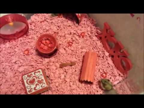 February hamster cage - valentines day theme ( new hamsters )