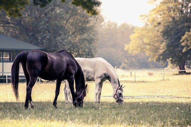 #horses #wroclaw #poland http://fochzprzytupem.wordpress.com