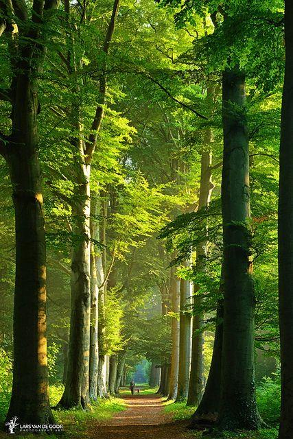 Beauty of summer in the Netherlands • photo: Lars van de Goor on 500px